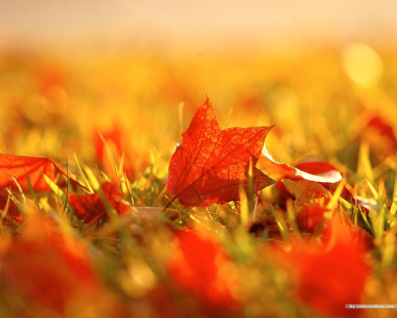 осенний листопад, скачать фото, обои для рабочего стола, листья, обои для рабочего стола