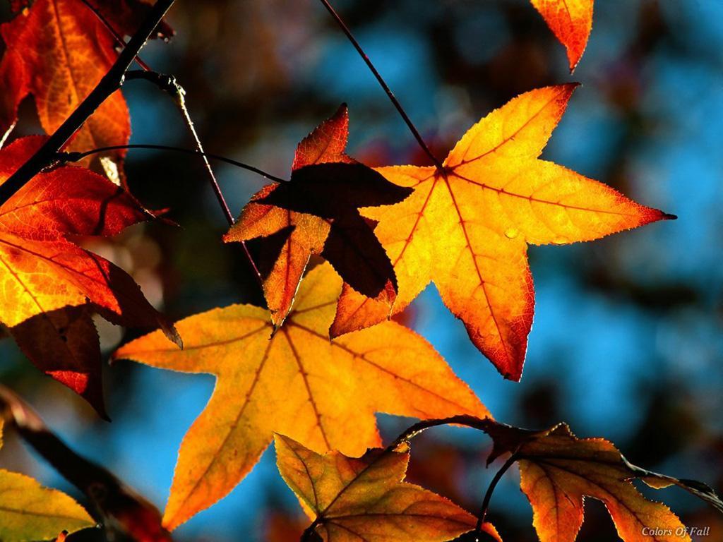 осенне небо, листья, скачать фото, осень
