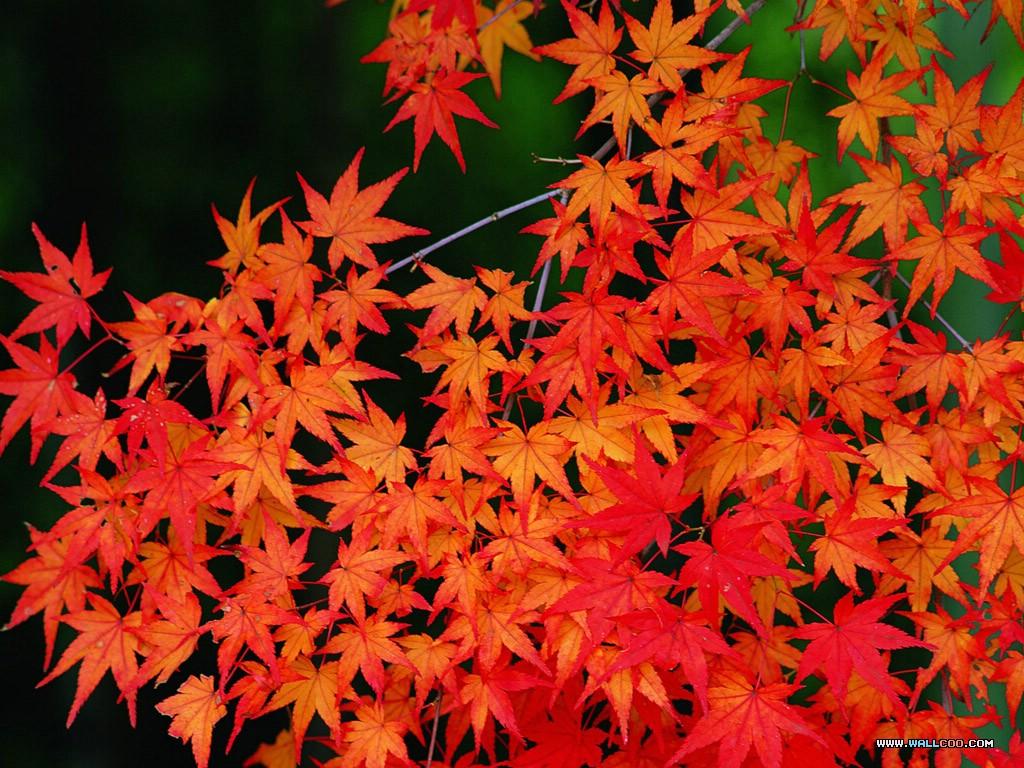 осенние листья, скачать фото, осень