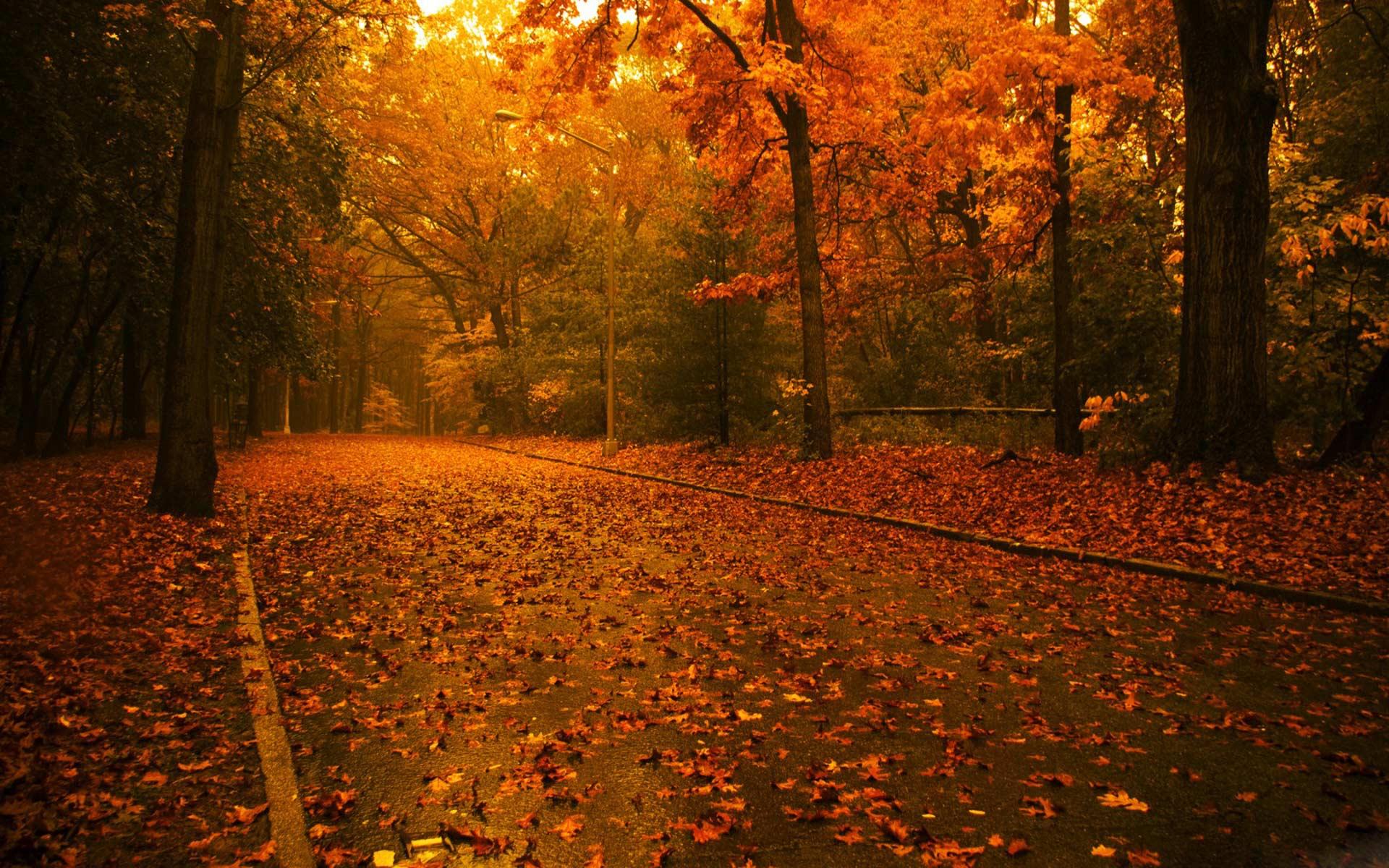 осень, опавшие желтые и рыжие листья, листопад, обои для рабочего стола, скачать