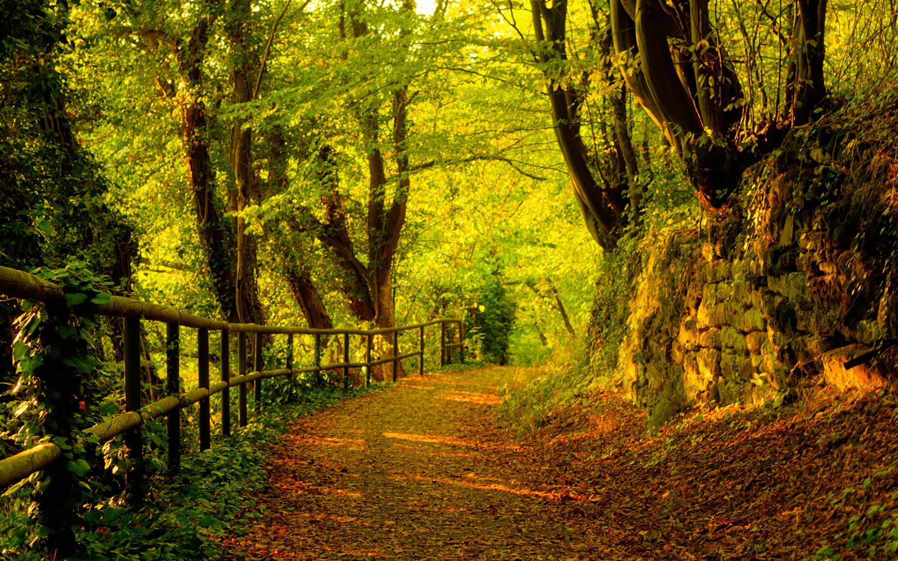 осень, дорога, autumn road wallpaper, скачать фото