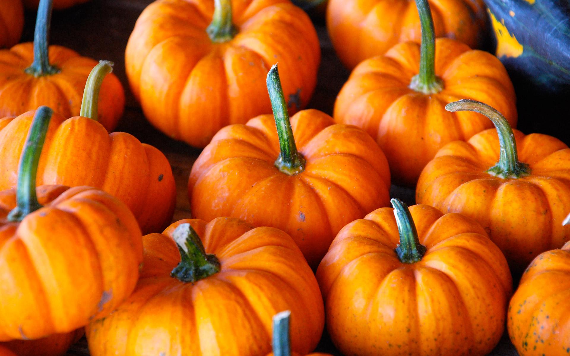 спелые оранжевые тыквы, скачать фото, обои для рабочего стола, хэллоин, осень