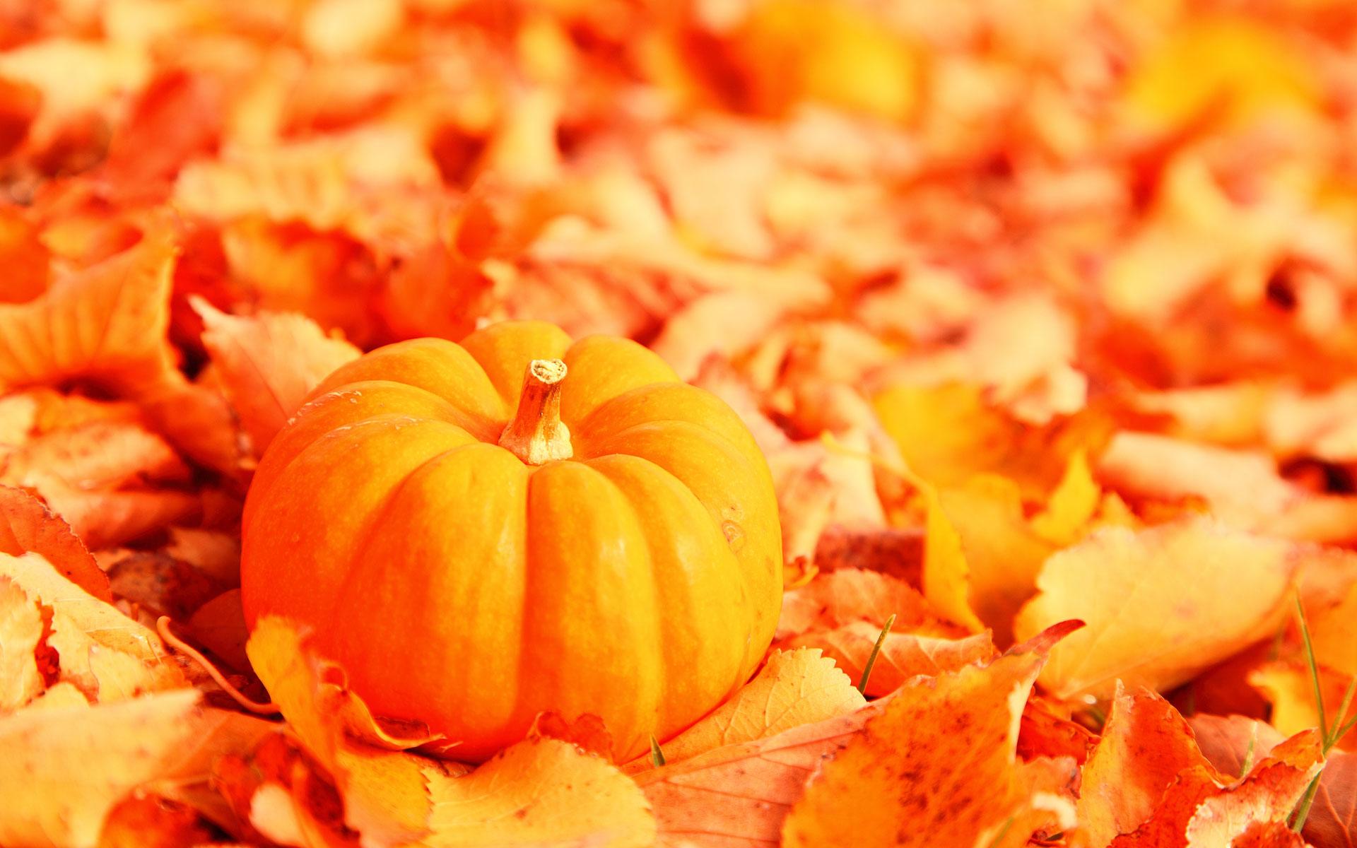 оранжевая тыква на фоне опавших листьев, осень, обои на рабочий стол, скачать фото