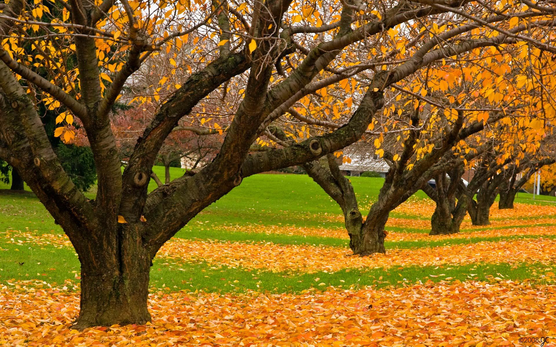 опавшая желтая листва, скачать фото, осень, деревья, лес