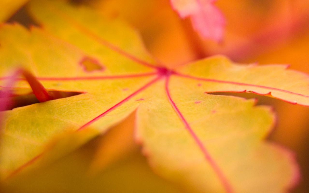 осенние листья, листопад, скачать фото, осень