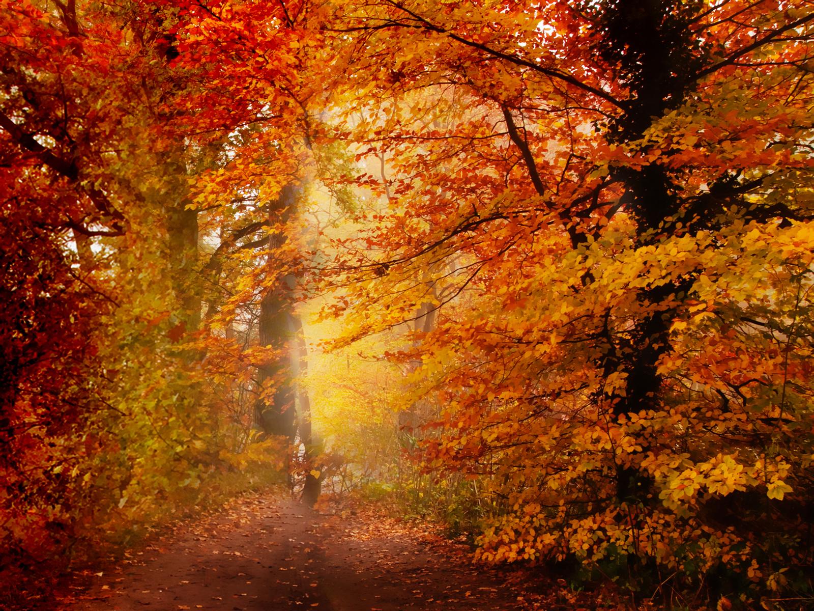 осенний лес, литься, лситопад, скачать фото, autumn wallpaper