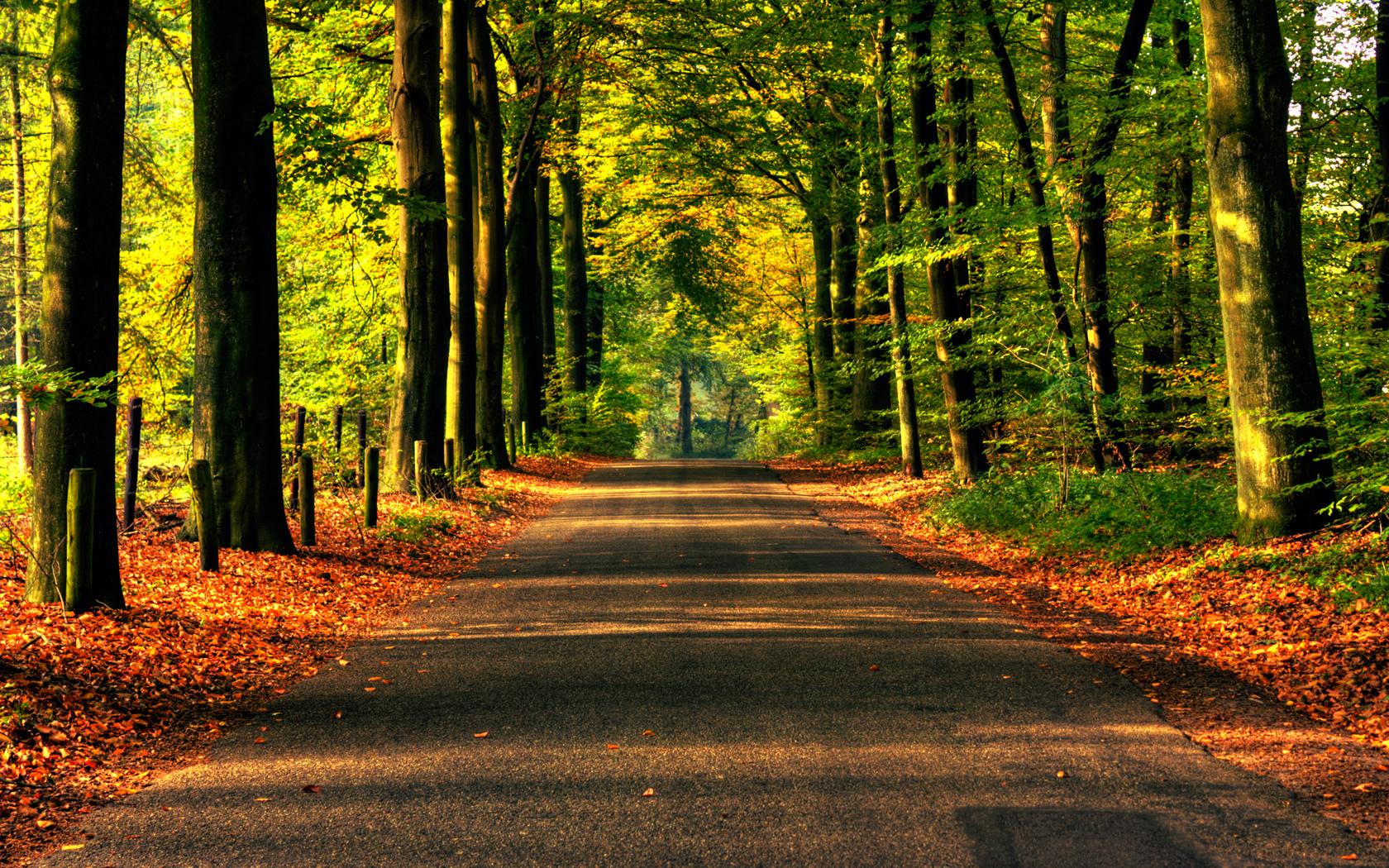 осень дорога, опавшие листья, лес, скачать фото, обои на рабочий стол
