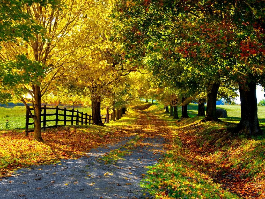 Дорога опавшие листья лес скачать