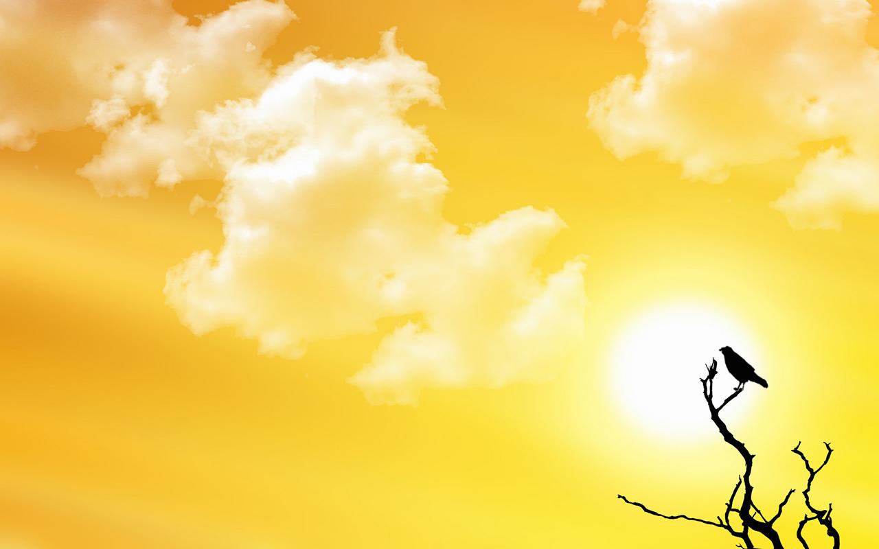Лето, желтое небо, птичка, скачать обои для рабочего стола