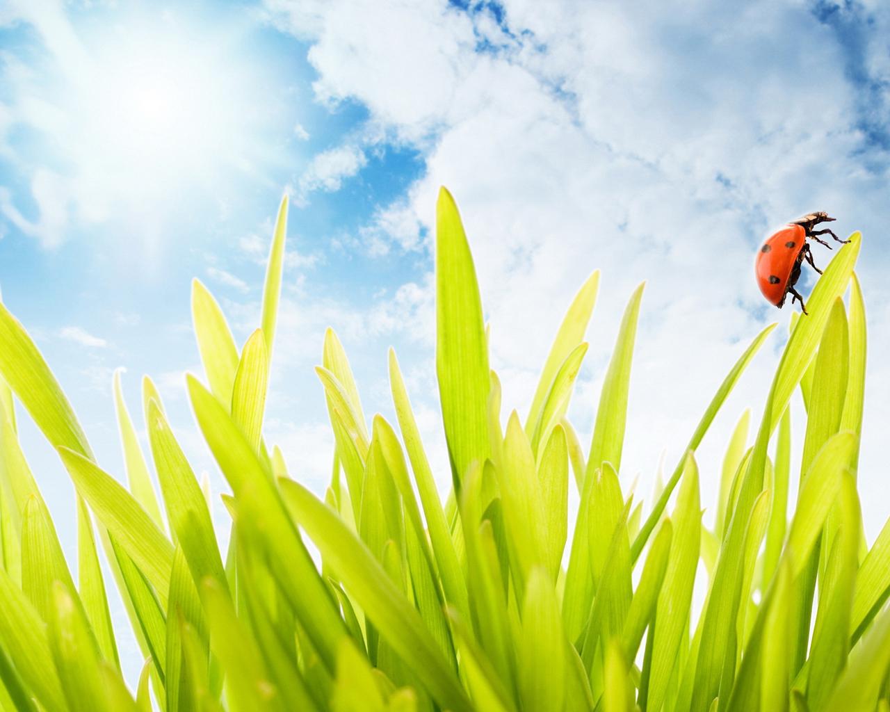 трава, небо и божья коровка, скачать фото, лето