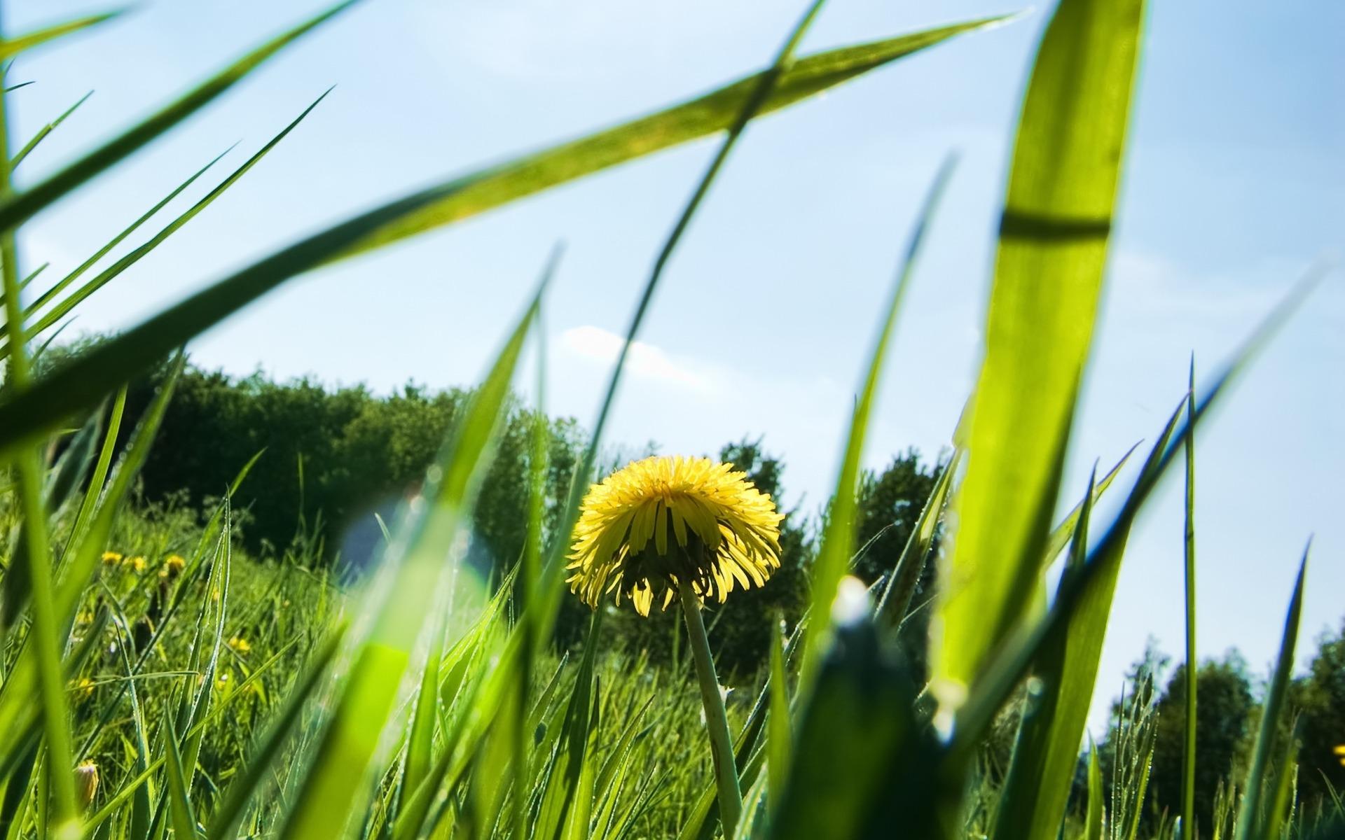 трава, лето, небо, солнце, скачать фото обои для рабочего стола