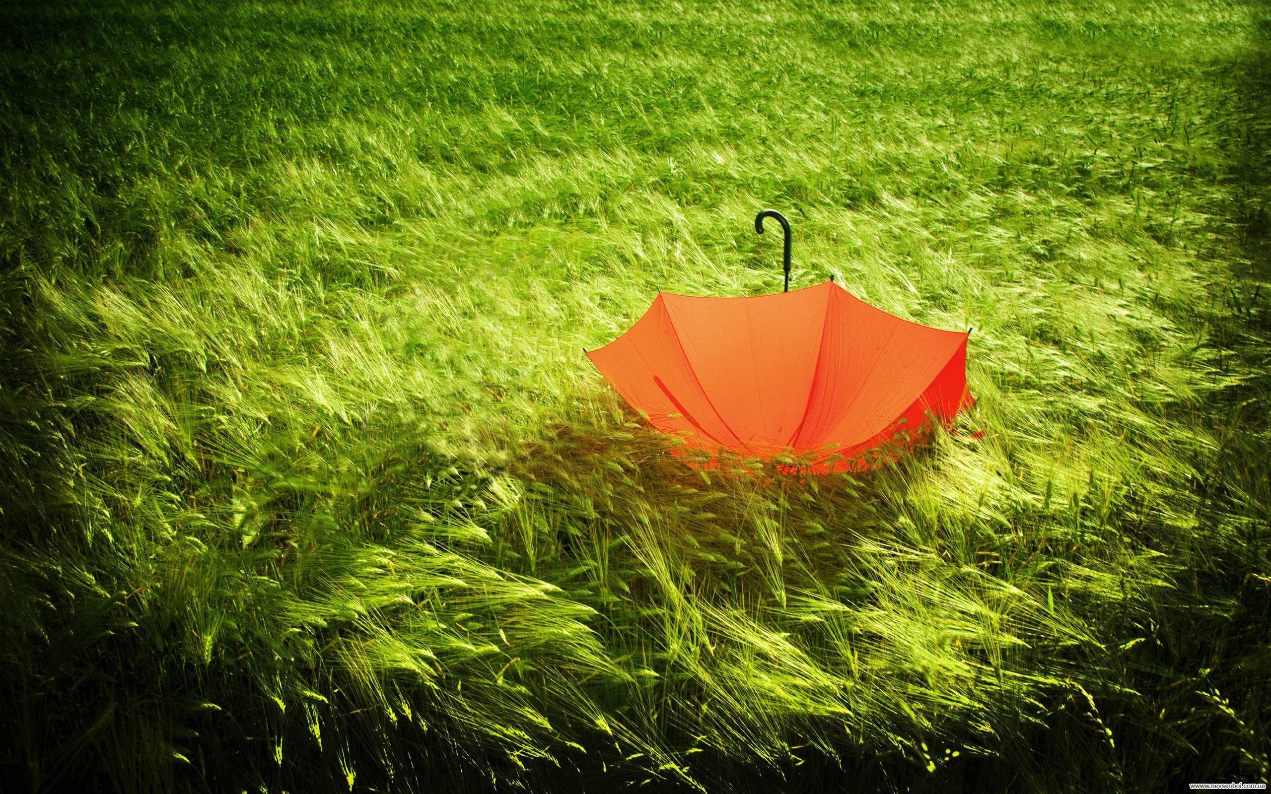лето, трава, зонтик, скачать фото, обои для рабочего стола