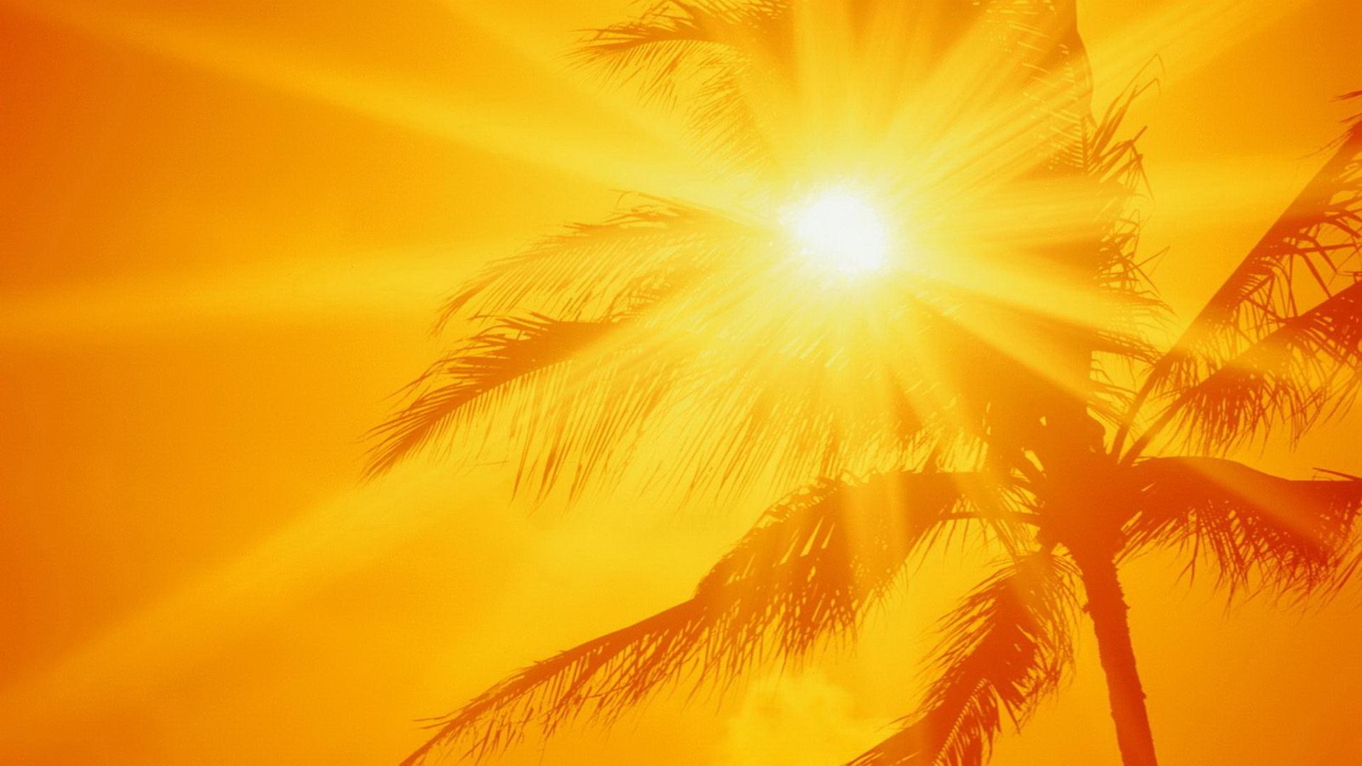 солнце, пальмы, лето, небо, скачать фото
