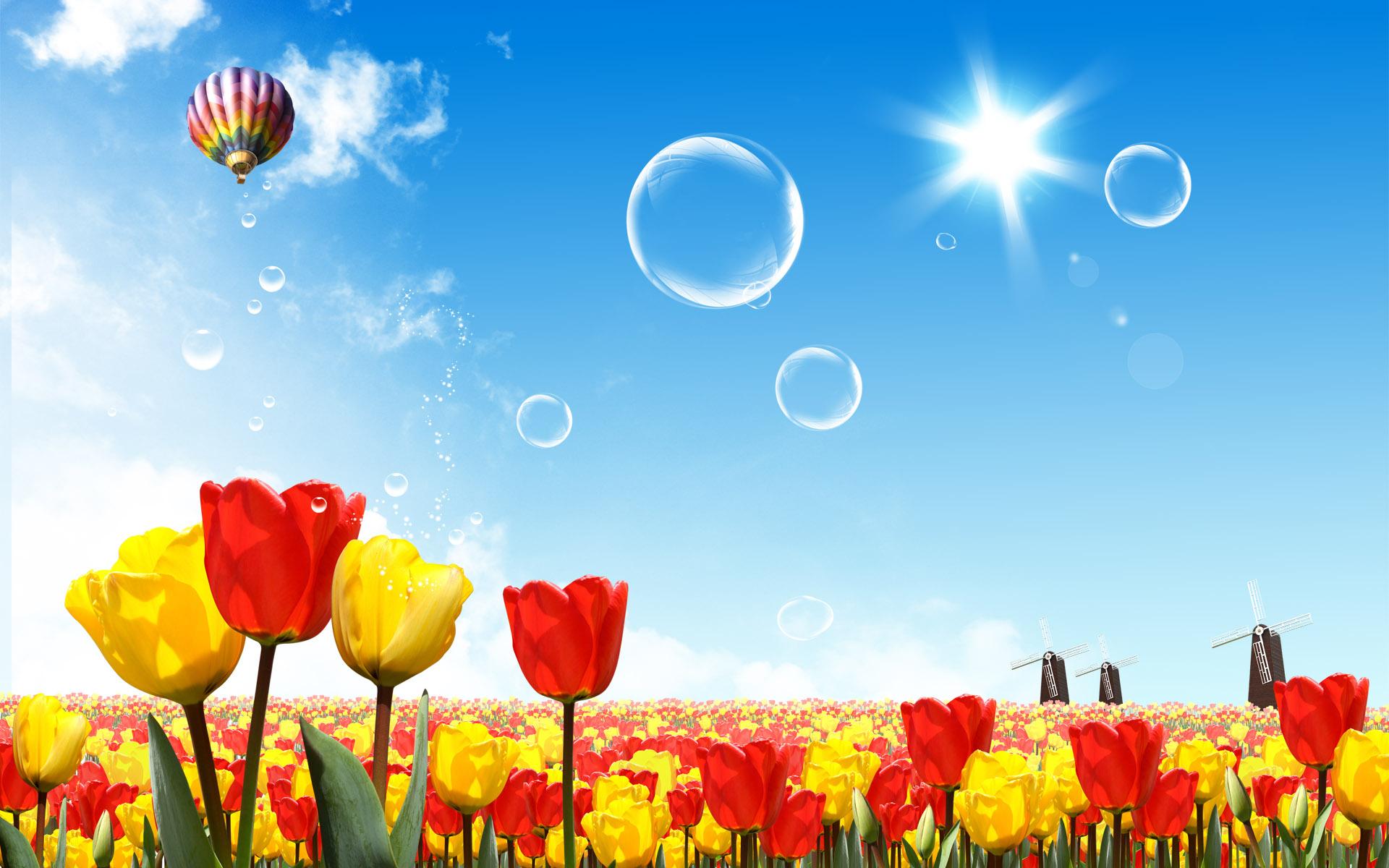 небо, солнце, лето, скачтаь фото, цветы, маки, обои на рабочий стол