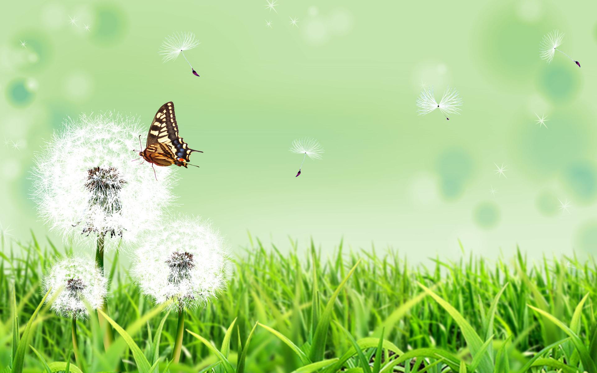 трава, одуванчики, скачать фото, бабочка, лето