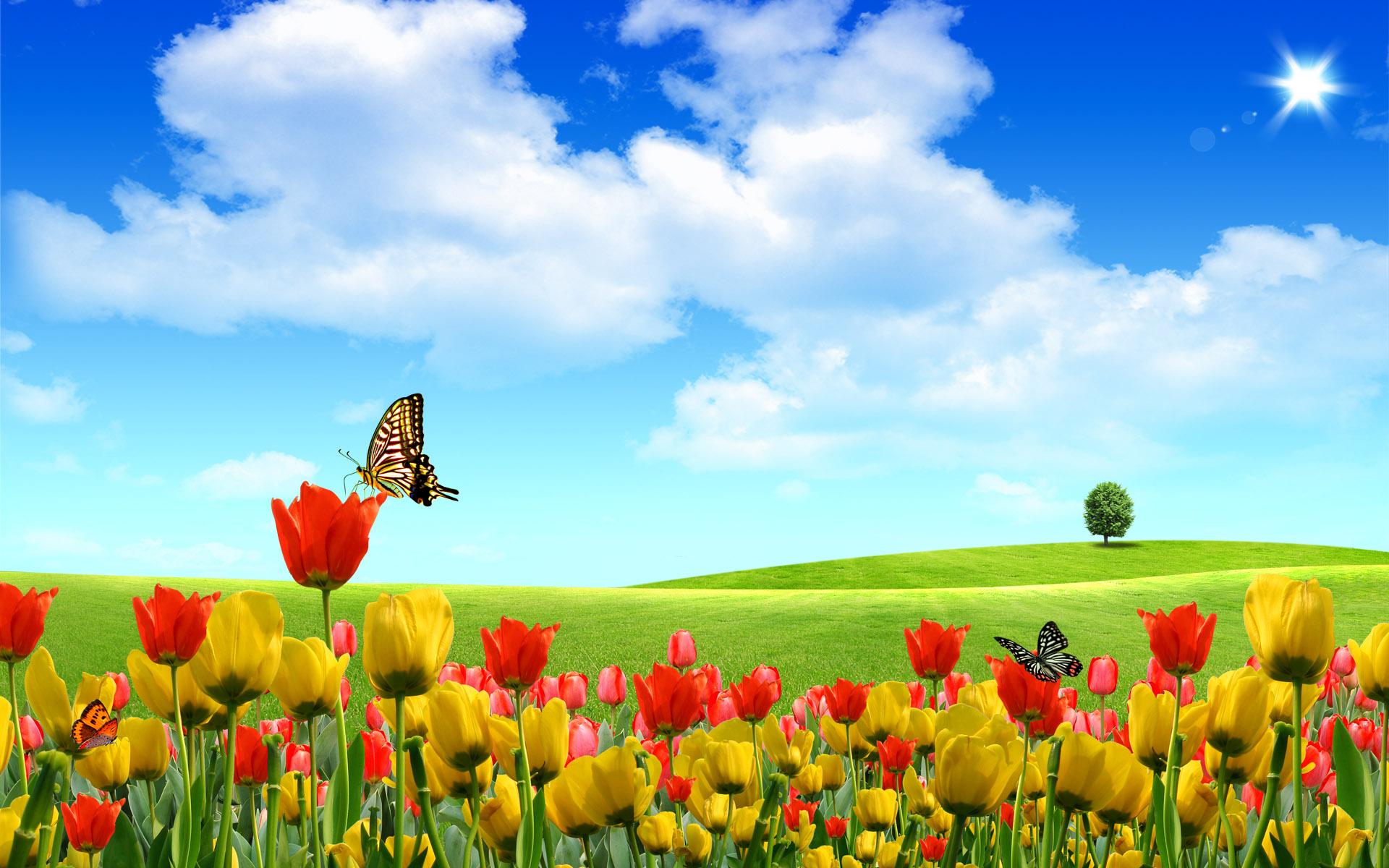 лето, summer wallpaper, скачать фото, обои для рабочего стола, желтые цветы, небо, бабочки