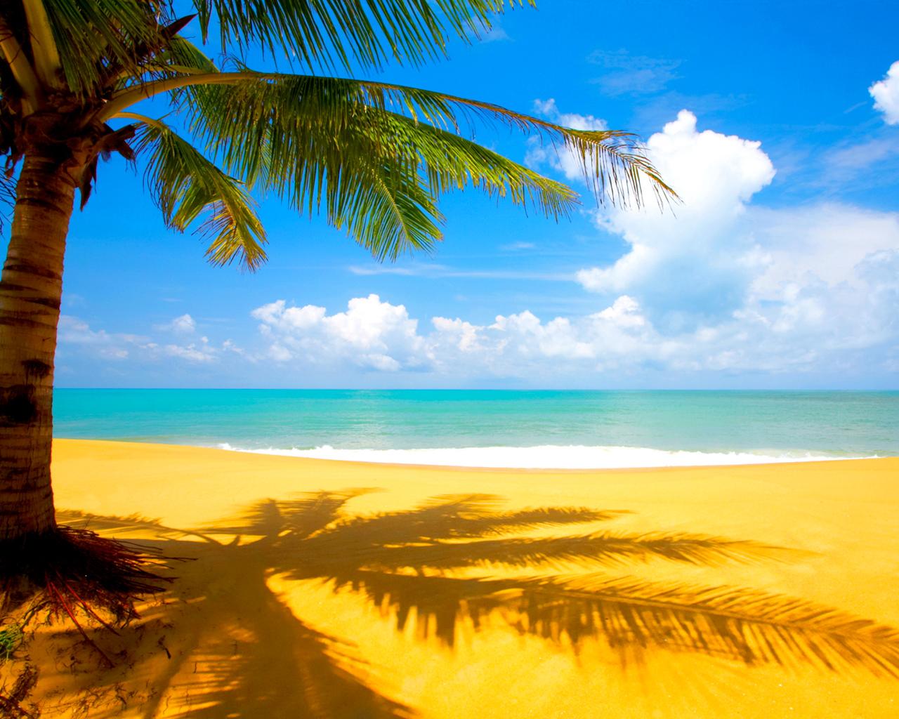 песок, пляж, море, пальма, скачать фото, обои для рабочего стола