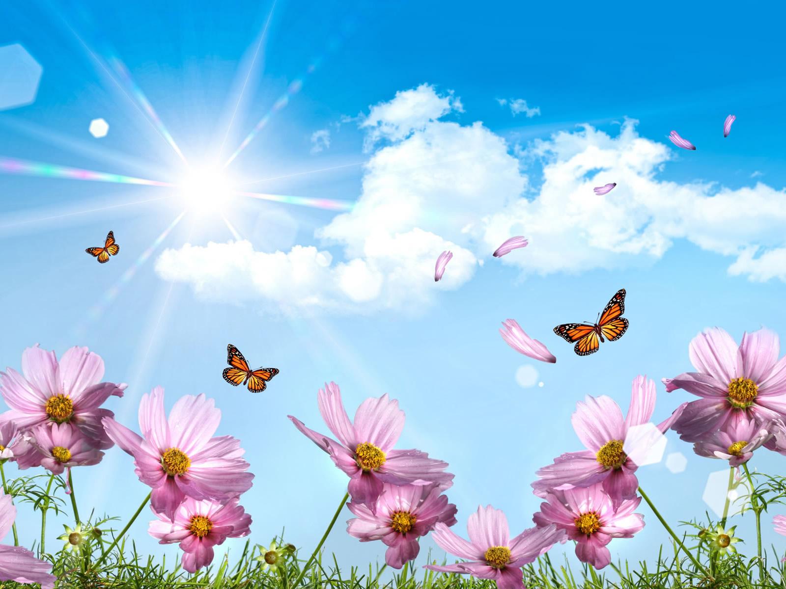 розовые цветы, бобочки, небо, скачать фото, лето