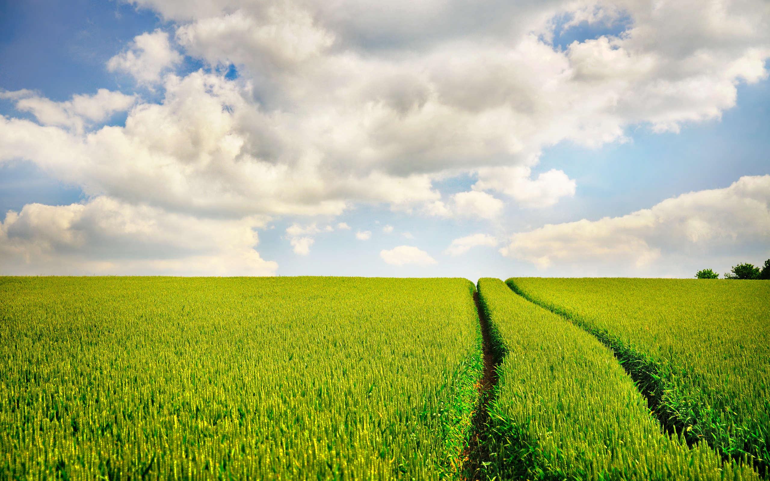 лето, небо, трава, дорога, скачать фото, обои для рабочего стола, облака
