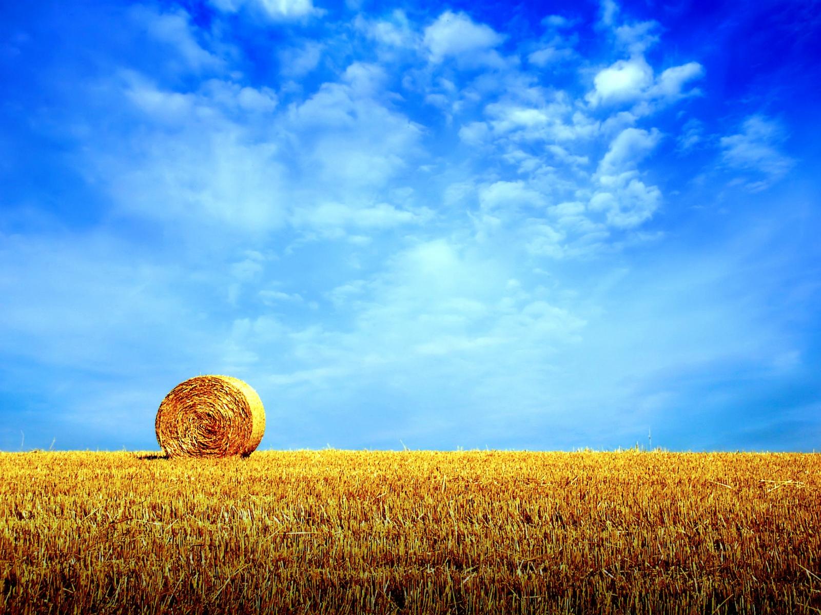 синее небо, голубое небо, перистые облака, скошенная пшеница. сено, лето