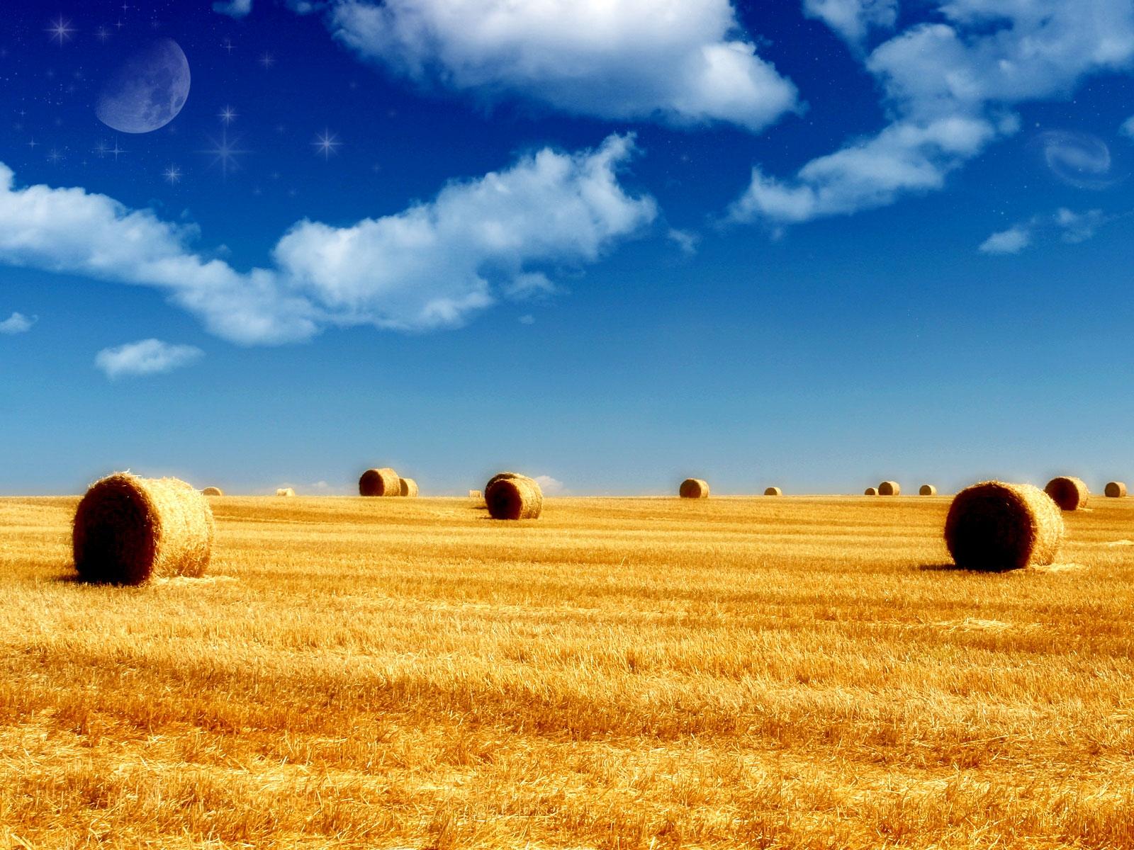 скошенное поле, трава, сено, лето, небо, скачать обои для рабочего стола