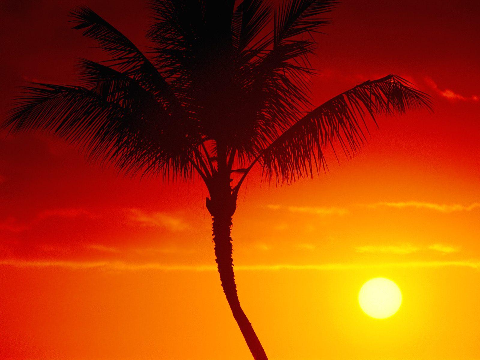 закат, лето, солнце, пальма, orange summer wallpaer, обои для рабочего стола