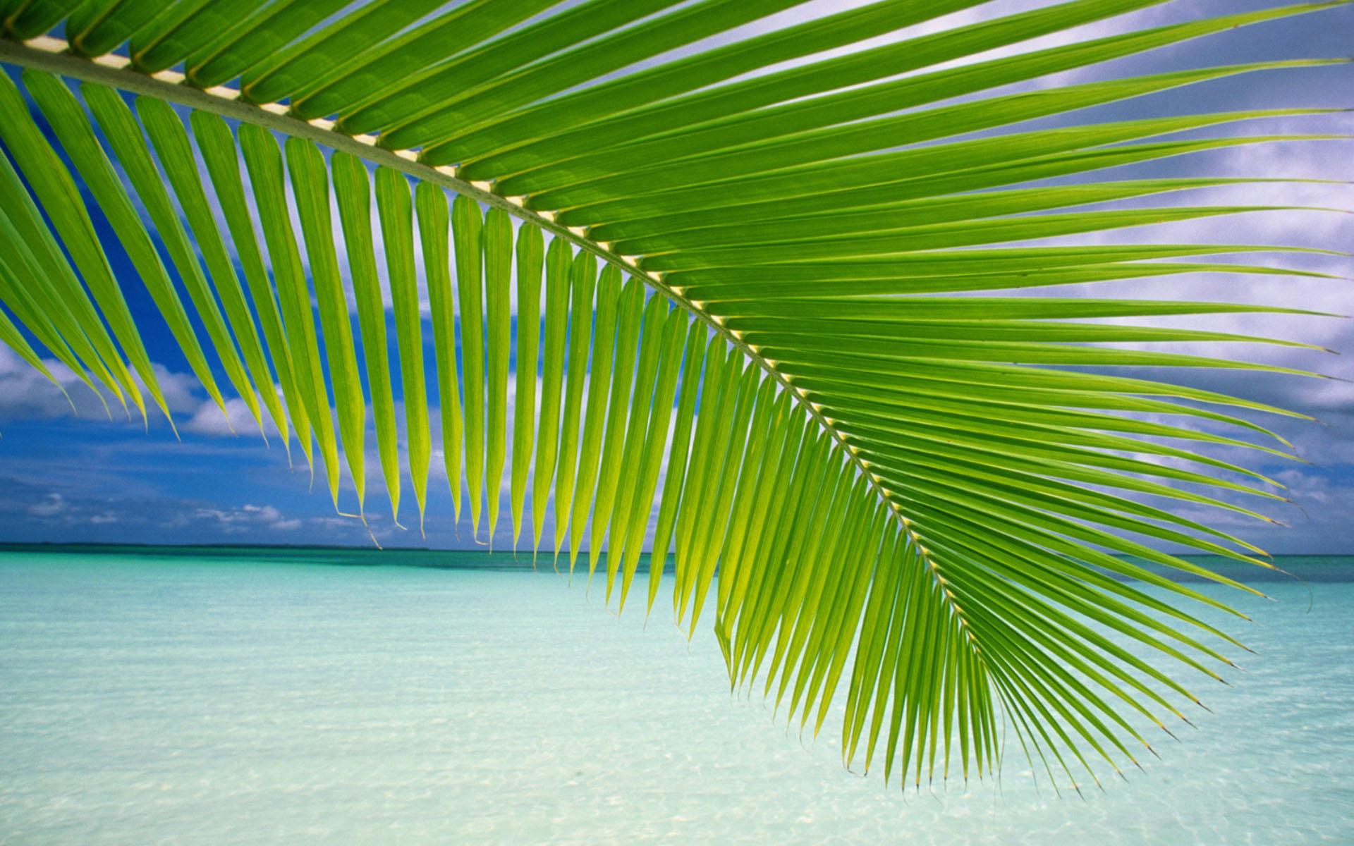 лето, море, пальмовая ветка, скачать фото, обои для рабочего стола