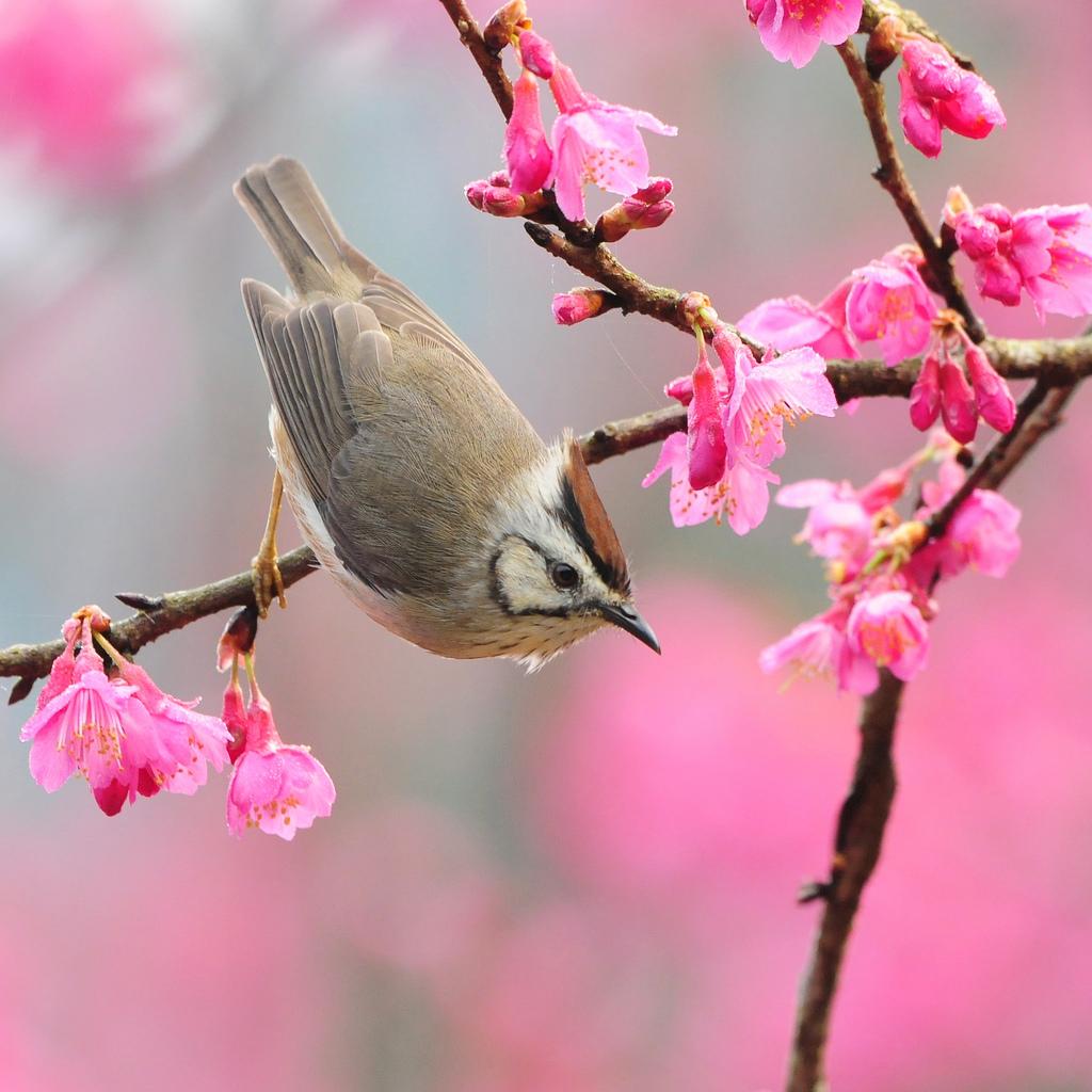 всена, птичкА, цветы, скачать фото, обои для рабочего стола, spring