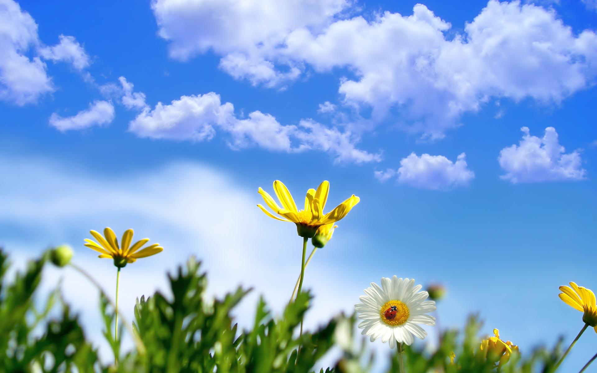 Цветы небо весна скачать фото обои