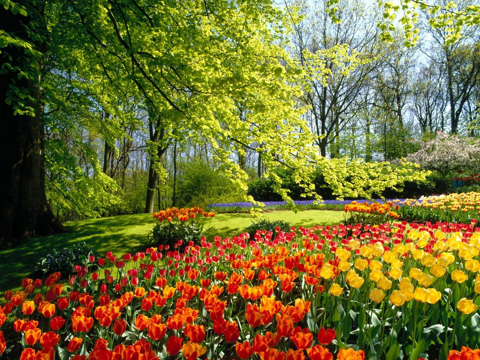 деревья, цветы, весна скачать фото, обои для рабочего стола