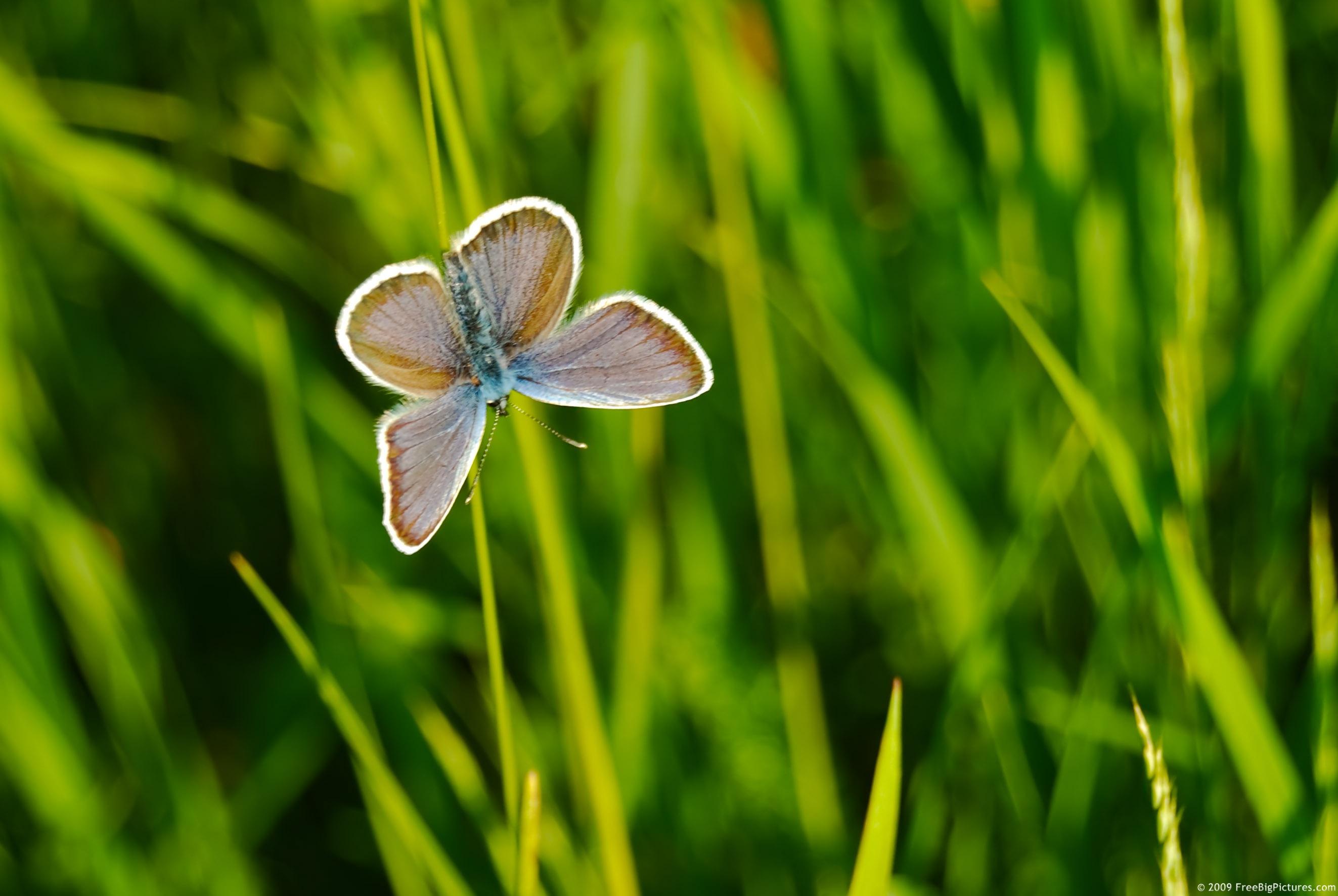 бобочка, травка, зелень, весна, скачать фото