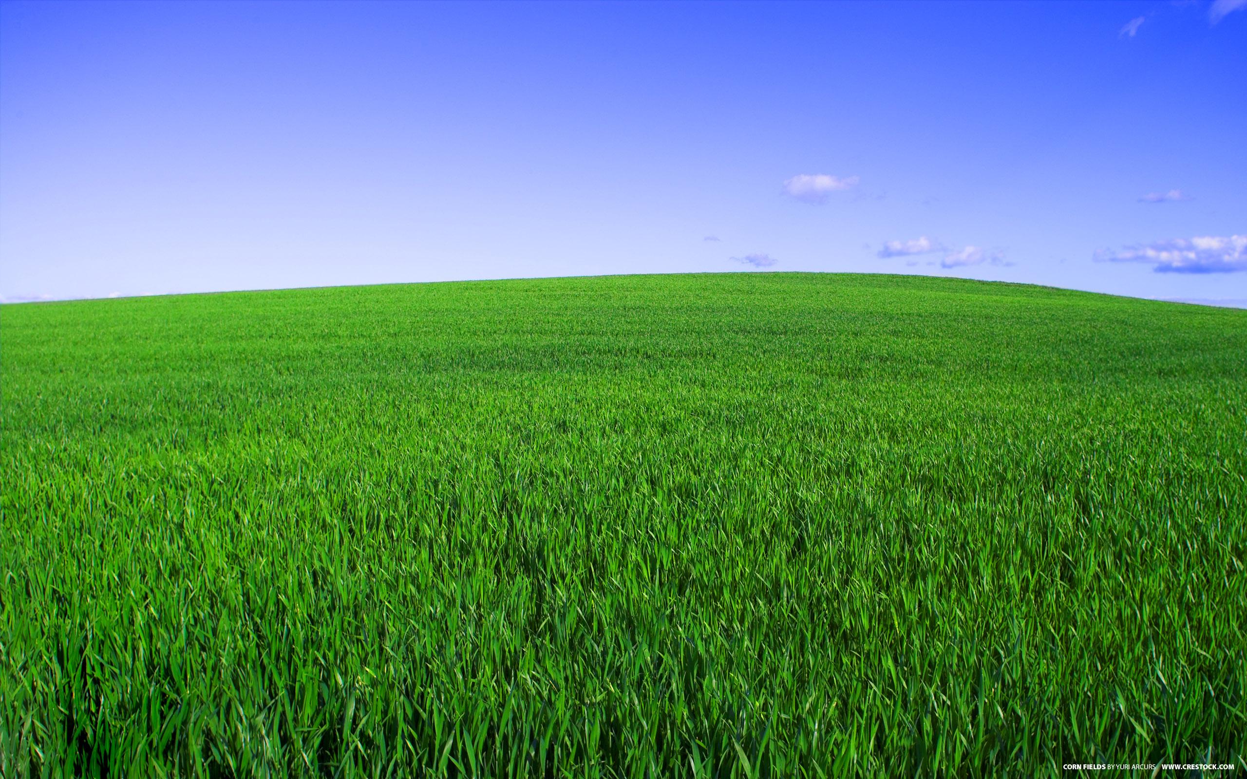 трава, луг, поляна, скачать фото, весна