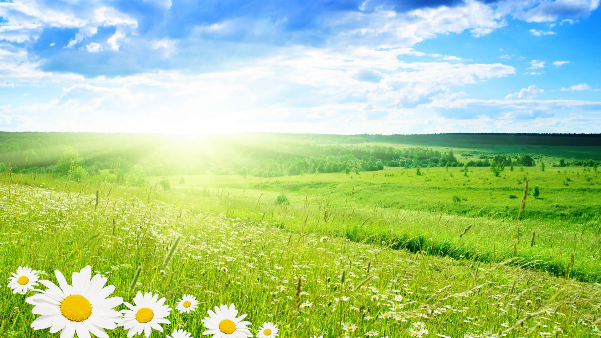 солнце, весна, трава, цветы, скачать фото, обои для рабочего стола