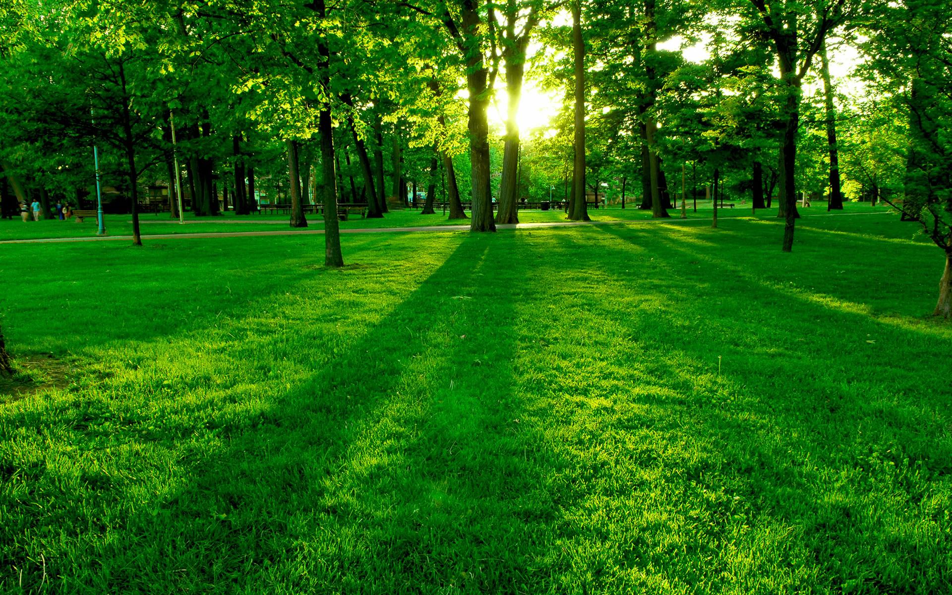 зеленая поляна, трава, скачать фото, обои для рабочего стола, spring wallpaper