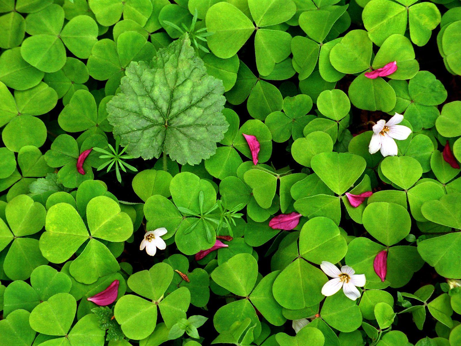 зеленые цветочки, весна, скачать фото, обои для рабочего стола