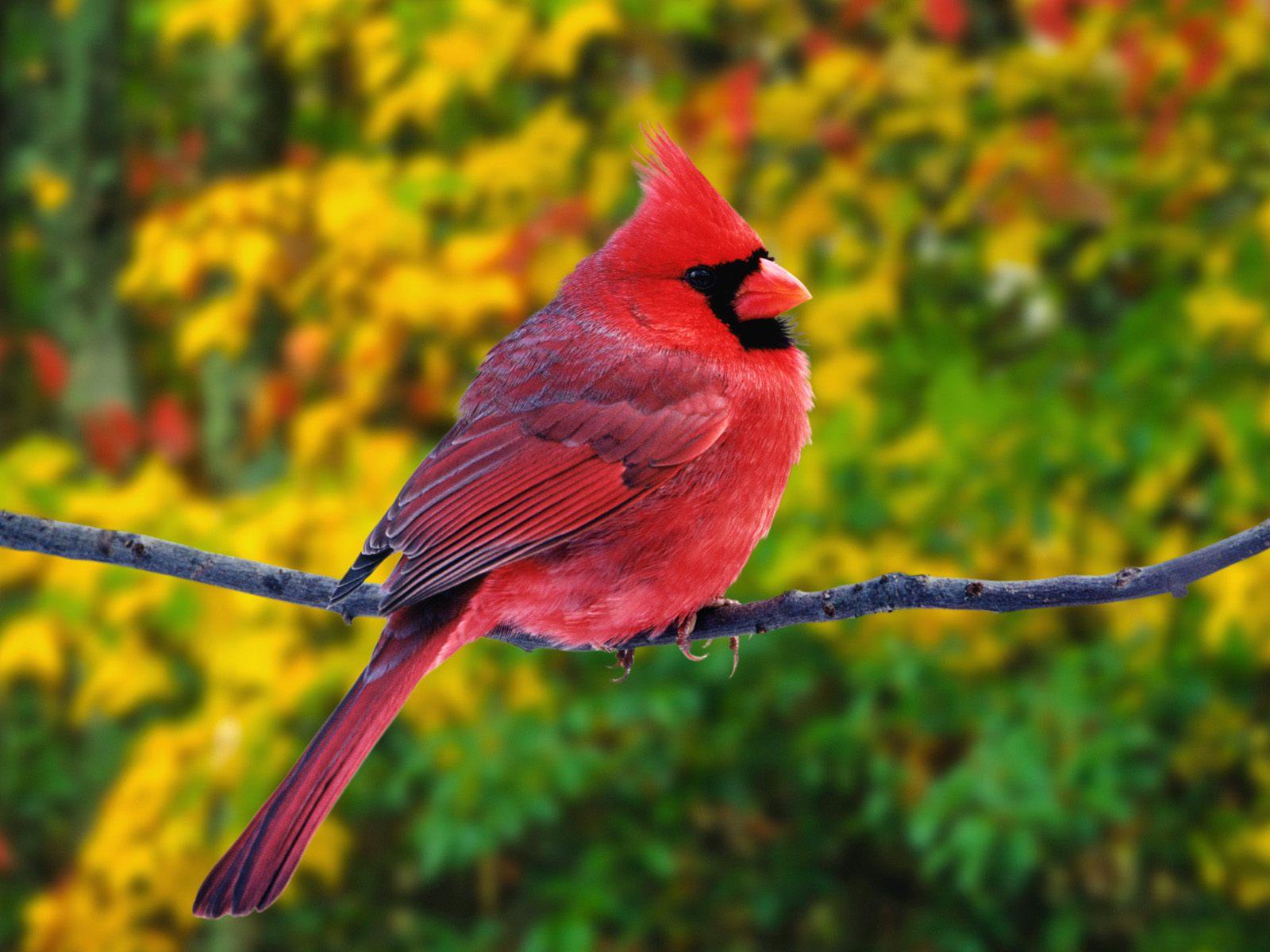 весна, цветы, красивая птичка