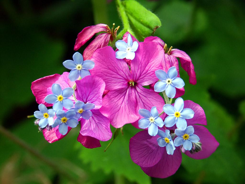 цветочки, flower spring wallpaper, скачать фото