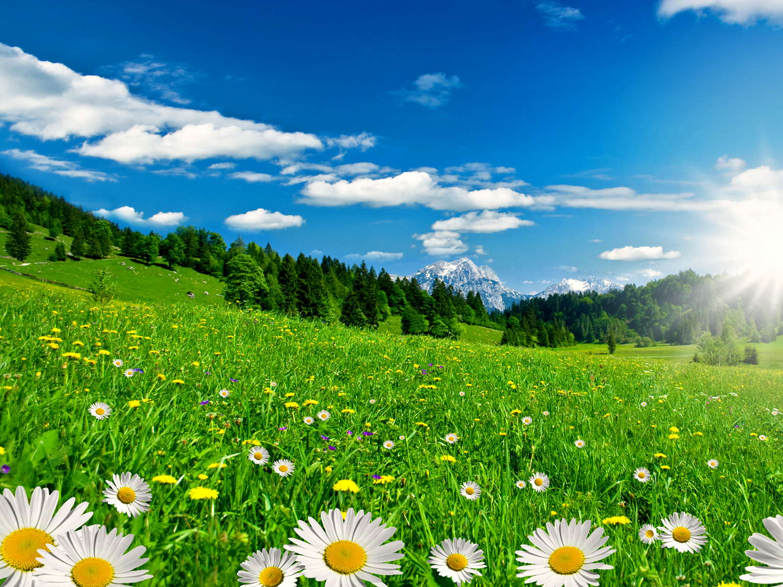 большая зеленая поляна с ромашками, скачать фото, небо, весна