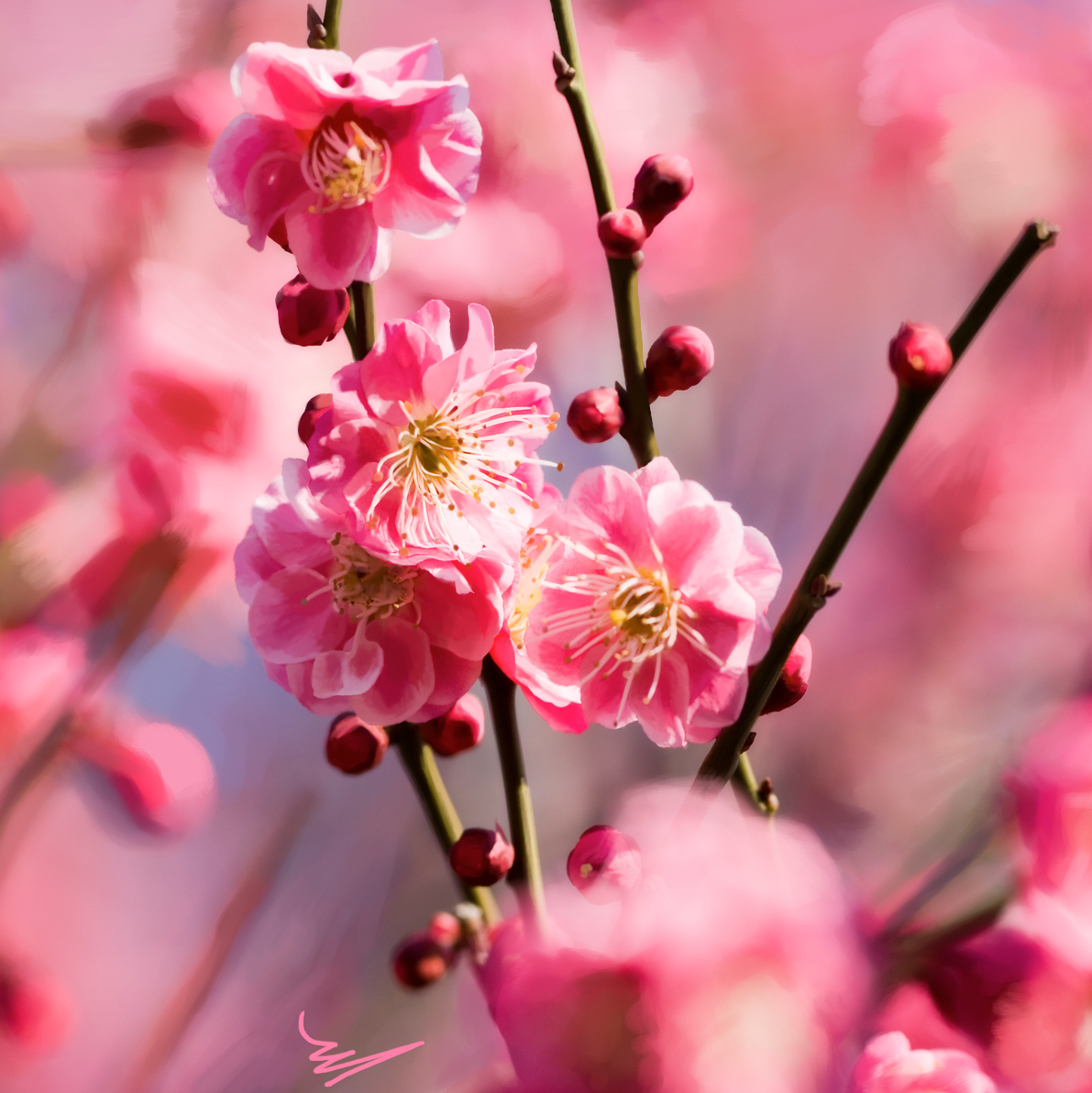 весна, цветы, фото, обои для рабочего стола, flower, spring