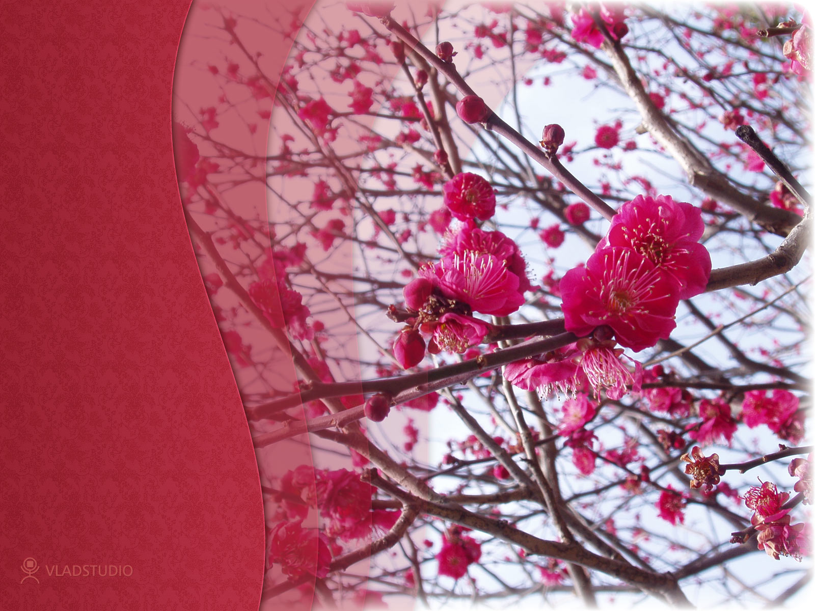 весна, скачать фото, цветы, обои на рабочий стол