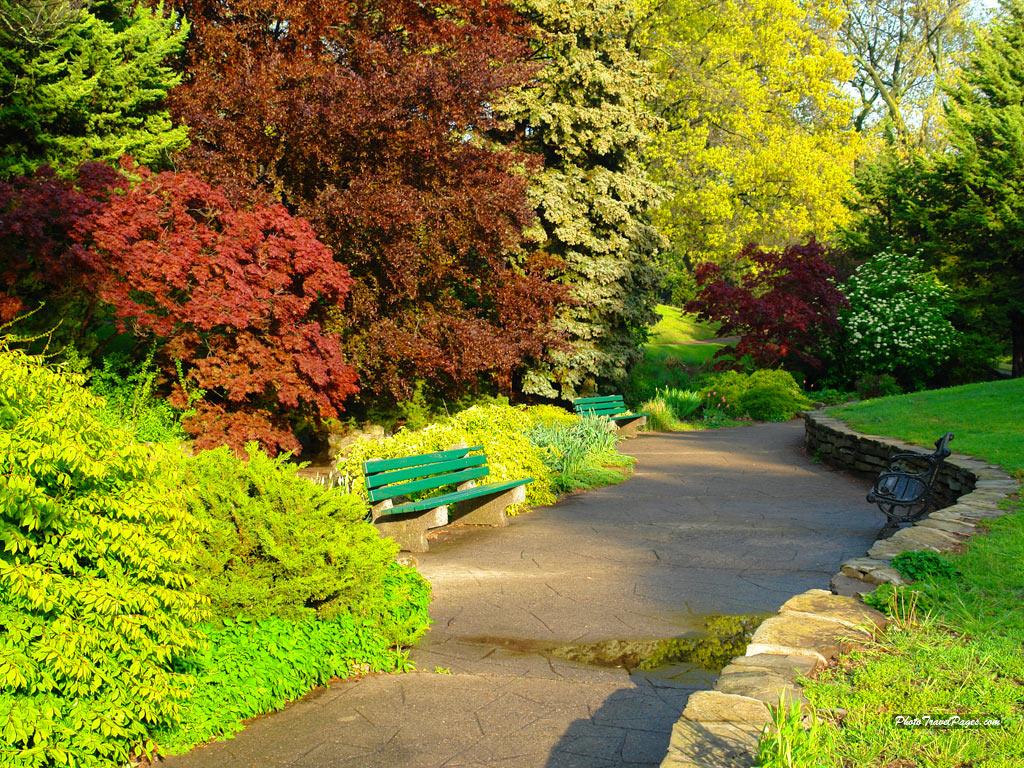 весна, цветы, кусты, деревья, зелень, скачать фото