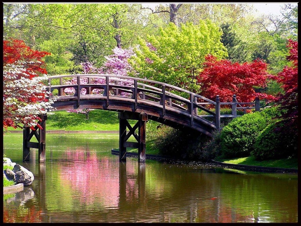 весна, цветы, мост, речка, скачать фото