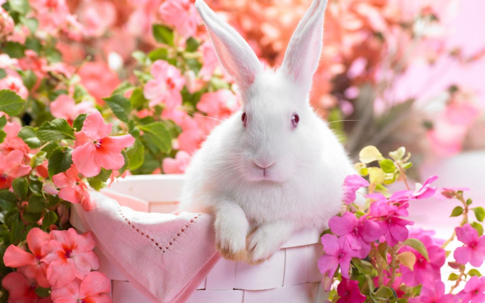spring rabbit wallpaper, скачать фото, обои для рабочего стола, кролик