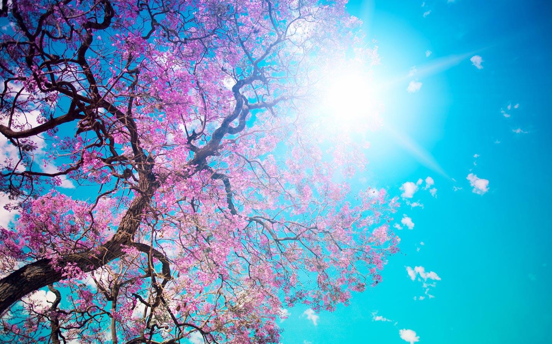 весеннее солнце и цветы, скачать фото, spring wallpaper