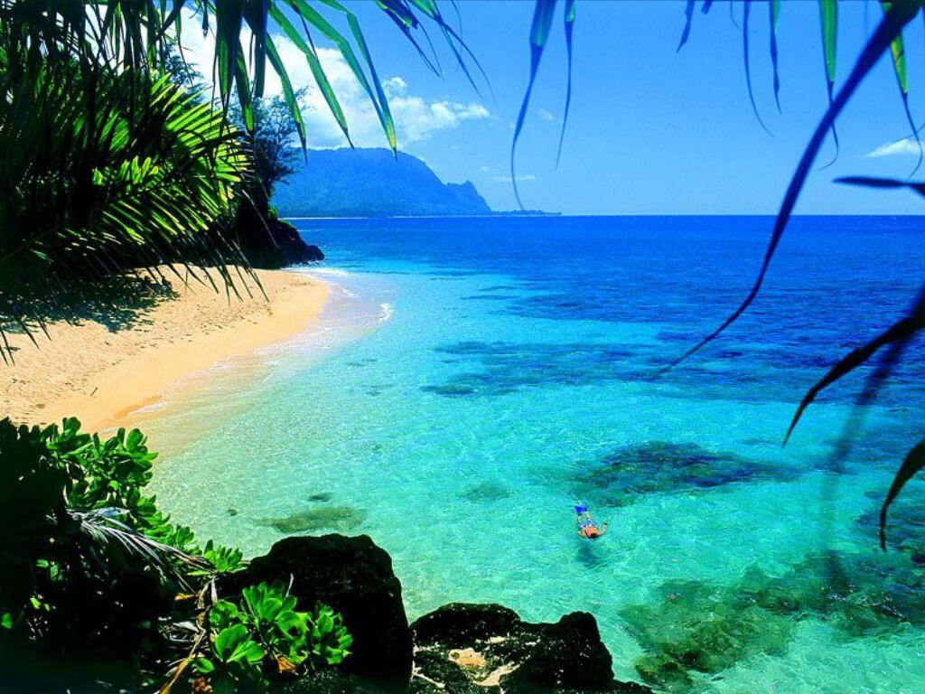 залив, море, пляж, пальмы, скачать фото, beach wallpaper