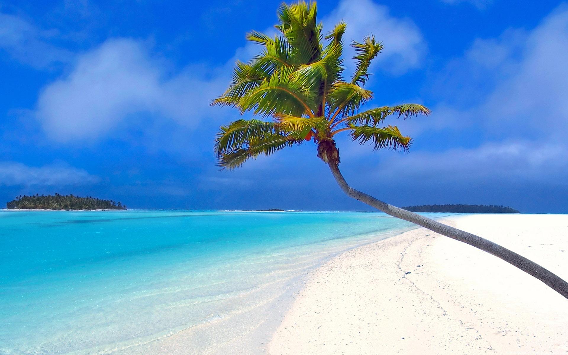 пальма на пляже, скачать фото, море, песок, обои для рабочего стола