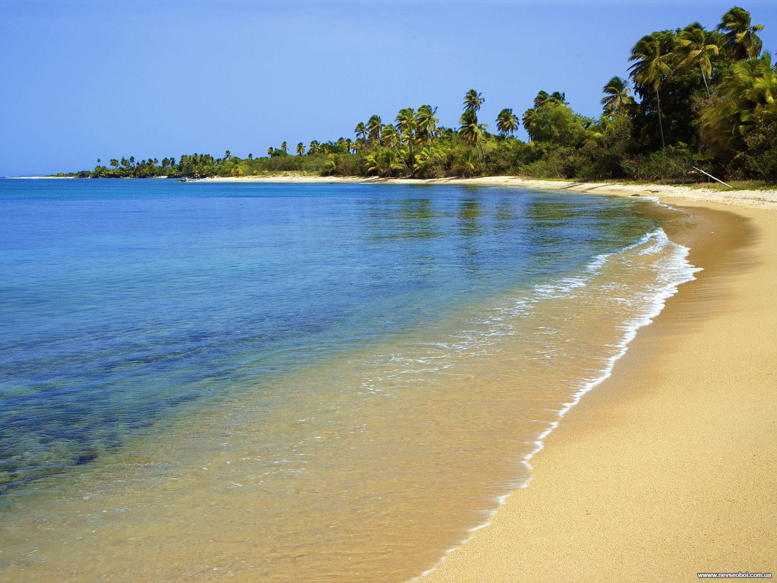 море, штиль, пляж. деревья, скачать фото