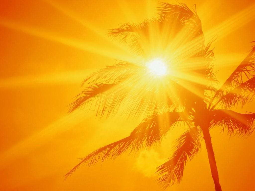 orange beach sky wallpaper, palm trees, пальмы, солнце, закат, пляж