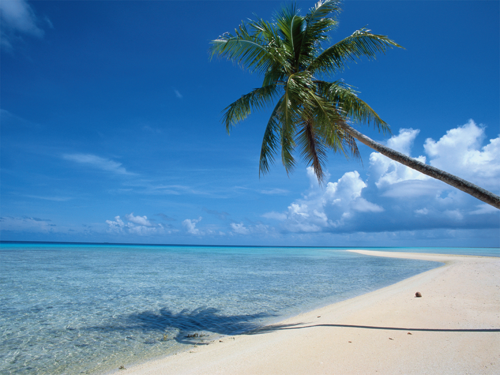 пляж, пальма, море, песок, скачать фото, обои для рабочего стола