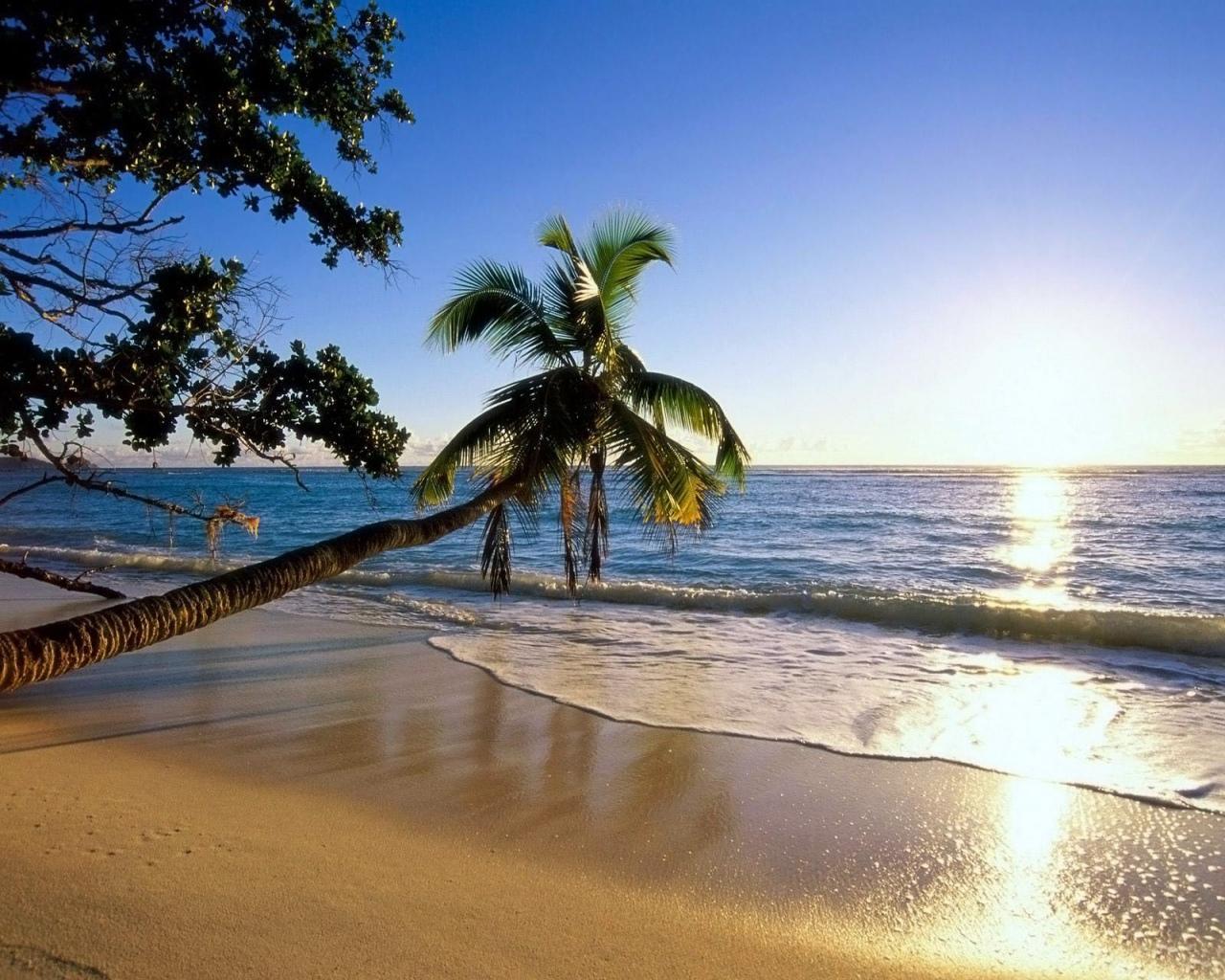 солнце пальмы море фото